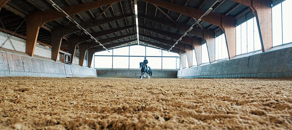 Pferde auf der Reitanlage